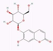 Aesculin/秦皮甲素(531-75-9,C15H16O9) 99% 纯化研发定制